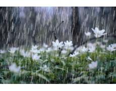 Antisipasi Musim Hujan Dengan Rainfall Gauge Data Logger
