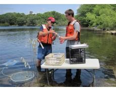 Pemantauan Monitoring Kualitas Air Secara Real-Time Dengan Water Level