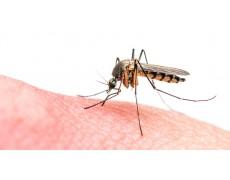 Menggunakan Biomimikri Dalam Mengurangi Hama Berbahaya