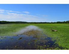 Lahan Basah Dan Manfaatnya Untuk Lingkungan Sekitar
