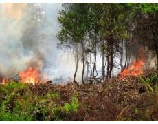 Weather Station Membantu Manajemen Kebakaran Hutan